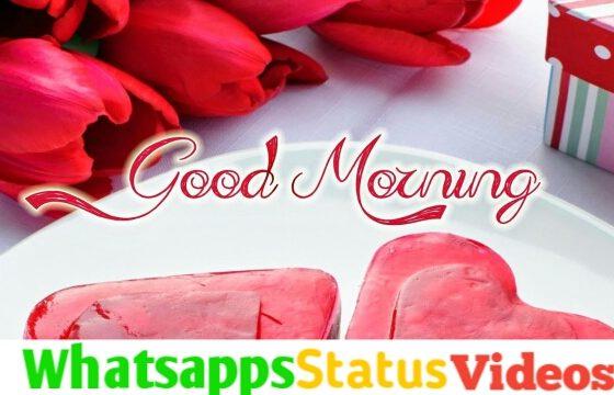 Good Morning Wish Status Video Download
