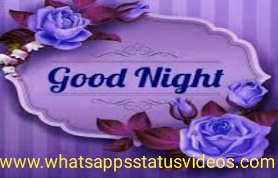 Good-Night-Wish-Status-Video-Download