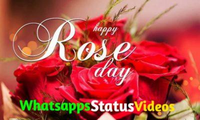 Happy Rose Day 2021 Whatsapp Status Video Download