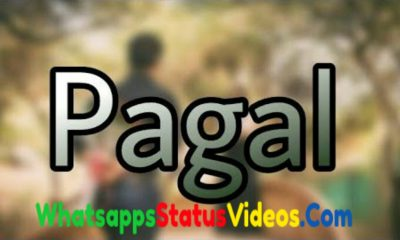Pagal World Whatsapp Status Video Download