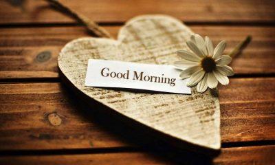 Good Morning Wish Whatsapp Status Video Download